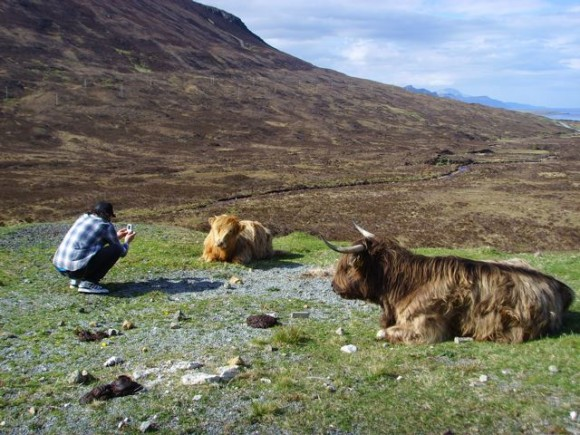 Tilt in Scotland for a Kidrobot photo shoot, with some long hair cows
