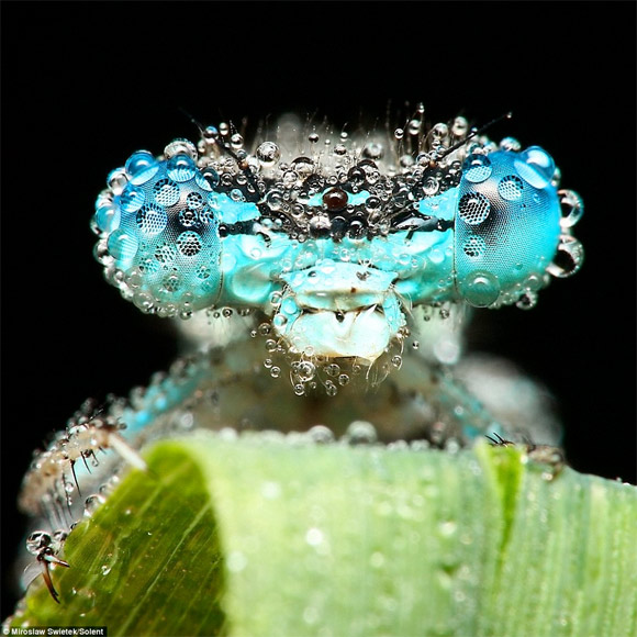 insect-close-up1